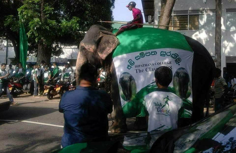 Popular school under fire for use of Elephants in Parade