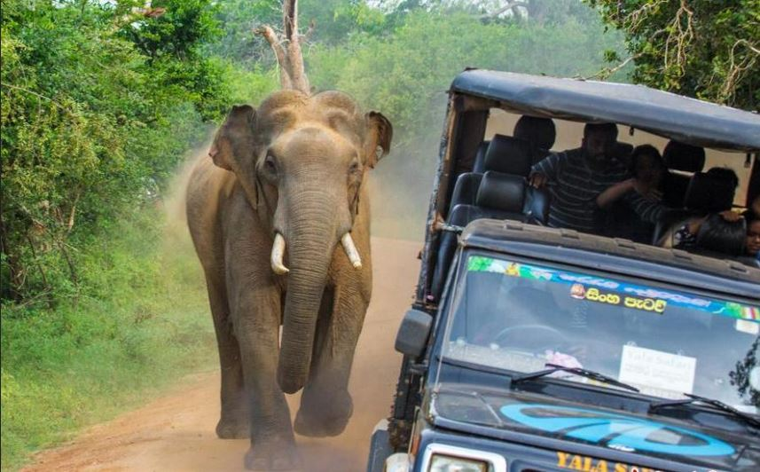 Image result for elephant attack jeep