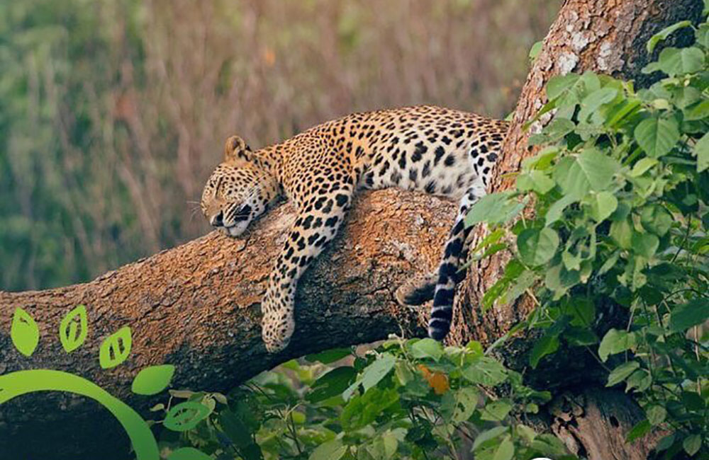 Live streaming wildlife; Sri Lanka tourism goes virtual