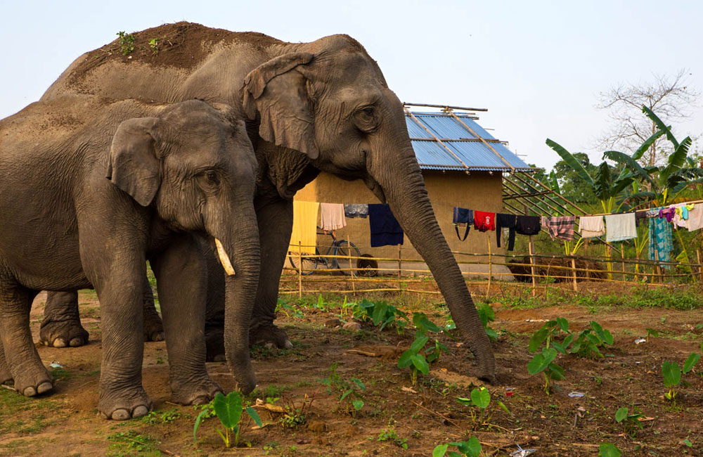 COPA calls for action plan within two months to resolve human-elephant conflict