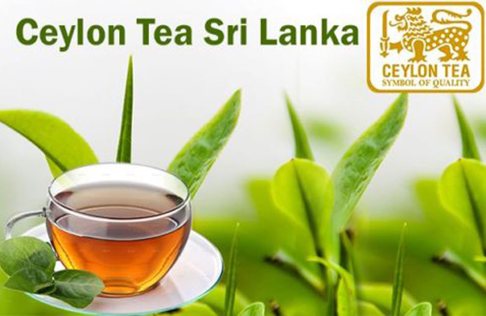 Ceylon Tea production in 2020 the lowest in 23 years